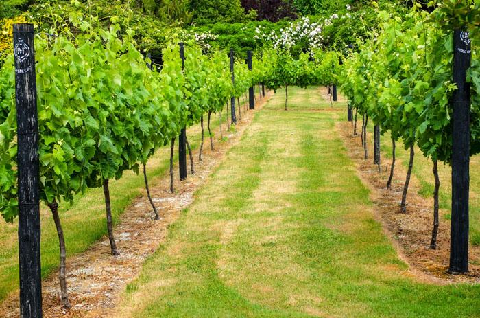 Zu dem Weinkeller gehört auch dieser schön angelegte Garten